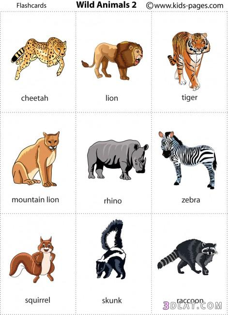 بالصور تعرف علي اسماء الحيوانات 03d69954d1ea76a00281f5ef68cd3537