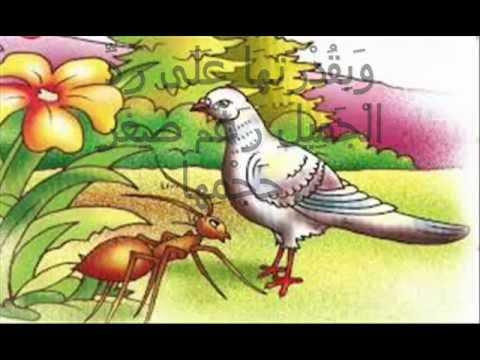 صوره قصة الحمامة والنملة والصياد
