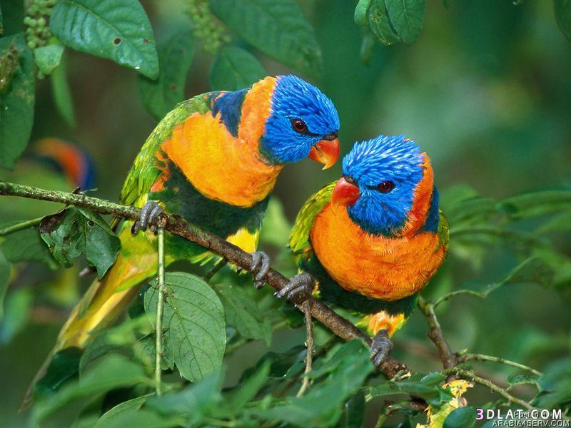 صوره خلفيات وصور اجمل العصافير