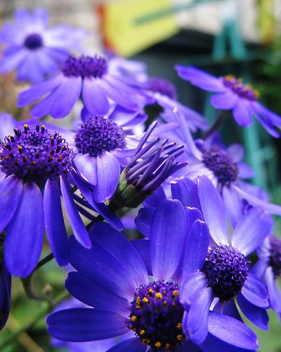 بالصور صورة زهور وورود بريه 09de71ecb995553806fc9a1b15061e15