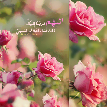 بالصور كلمات جميلة مما راق لي 165d9c7b849987629ad9c71d56b559cd
