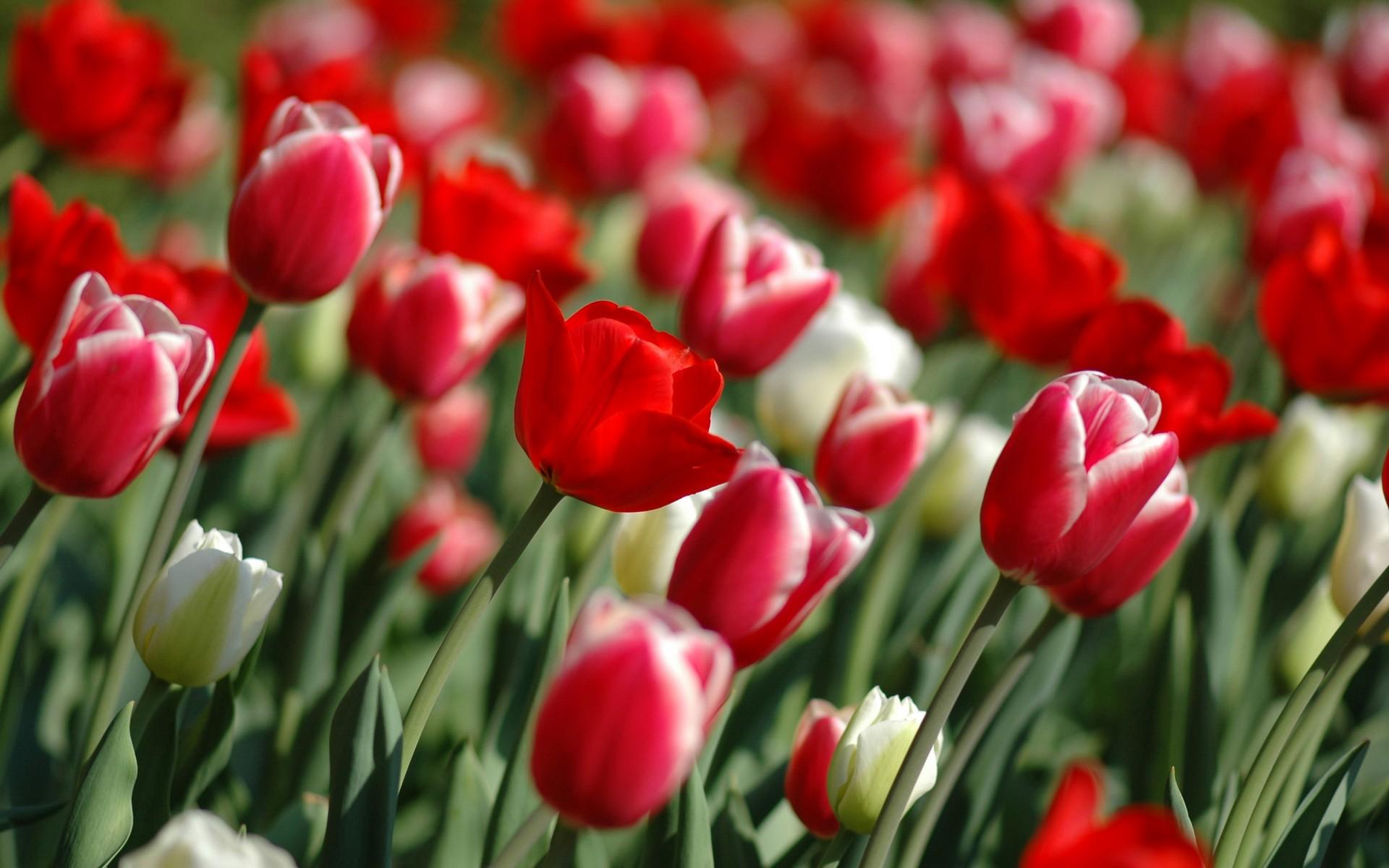 صوره اجمل الصور للزهور الطبيعيه