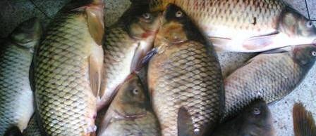 صوره علاقة السمك بالبرد عشرة اخطاء شائعة مع البرد