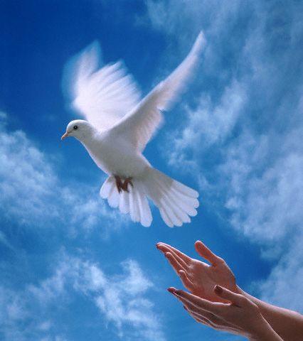 صوره صور معبرة عن السلام