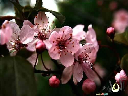 احلى ورود 2019, زهور منوعة اجمل ملونة 2019