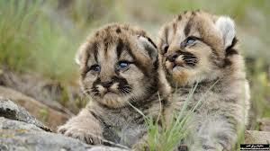 بالصور معلومات عن اولاد الحيوانات 299c38e46a45076e8906251382406d4f