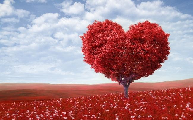 بالصور صور قلب احمر جميل 2a67e3efed63564bd45e8aa263fcdaa3