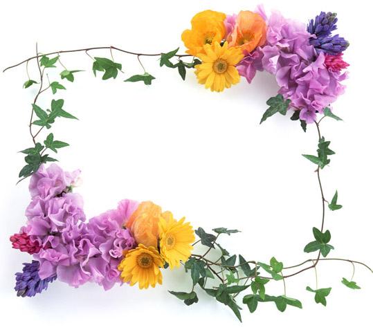 صوره براويز ورود وزهور اطارات ورود بدقة عالية وبخلفية شفافة Collection Flowers