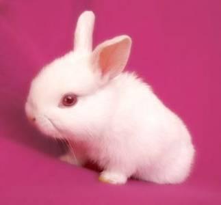 صور اجمل صور ارانب صغيرة وجميلة