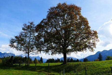 صوره تفسير حلم غرس شجرة