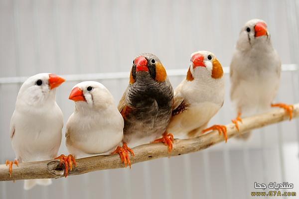 صور طيور روعة ، صور احلى الطيور في العالم 2020 ، صور طيور كيوت صغار Cute Birds 2020