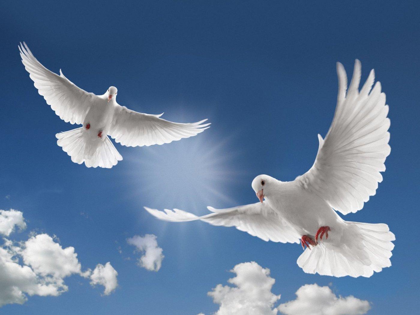 صورة تعريف السلام واهميته وادابه
