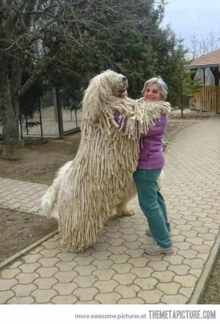 بالصور اكبر كلاب في العالم 42400042e7085ff18419961f17bd253a
