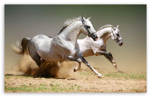 بالصور صور خيول اصيلة بالوان جميله 44a0554a615684c70d5e16a524671cea