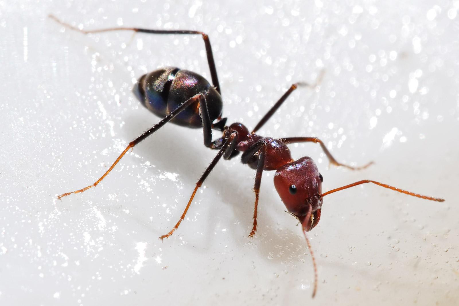 صوره بحث عن الحشرات النافعة مثل النمل
