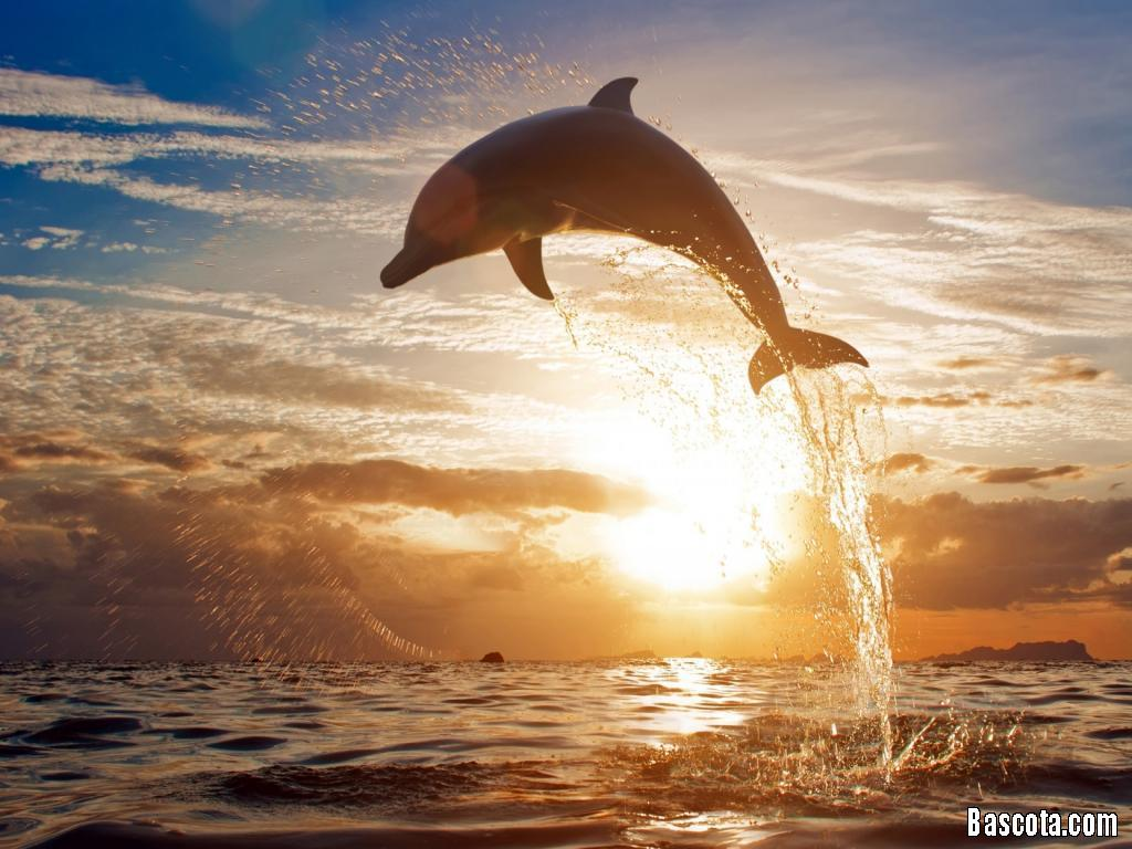 صوره صور طببعية لشروق الشمس