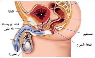 صورة علاج التهاب غدة البروستاتا بالاعشاب