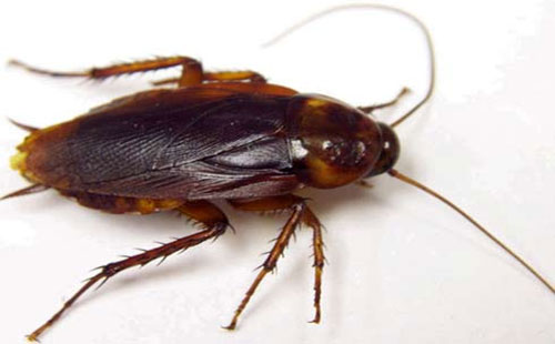 بالصور تفسير رؤية الحشرات الزاحفة في المنام لابن سيرين 5ee337fd23b0c04469b03492ea61336e