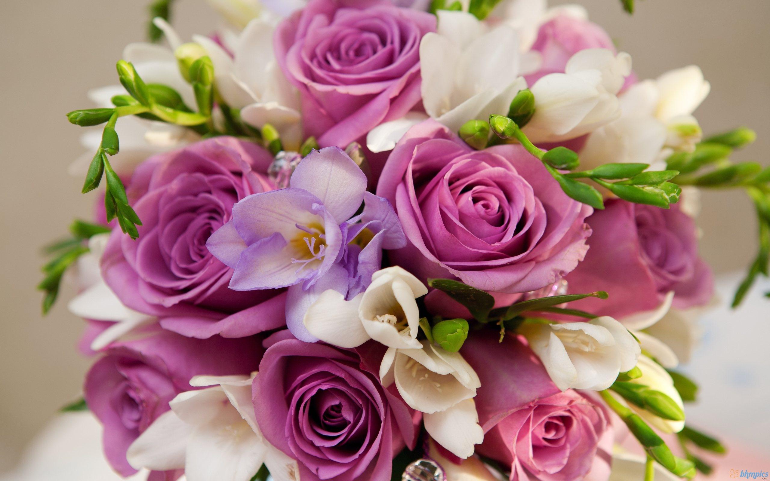 صوره اجمل الزهور والورود الملونه