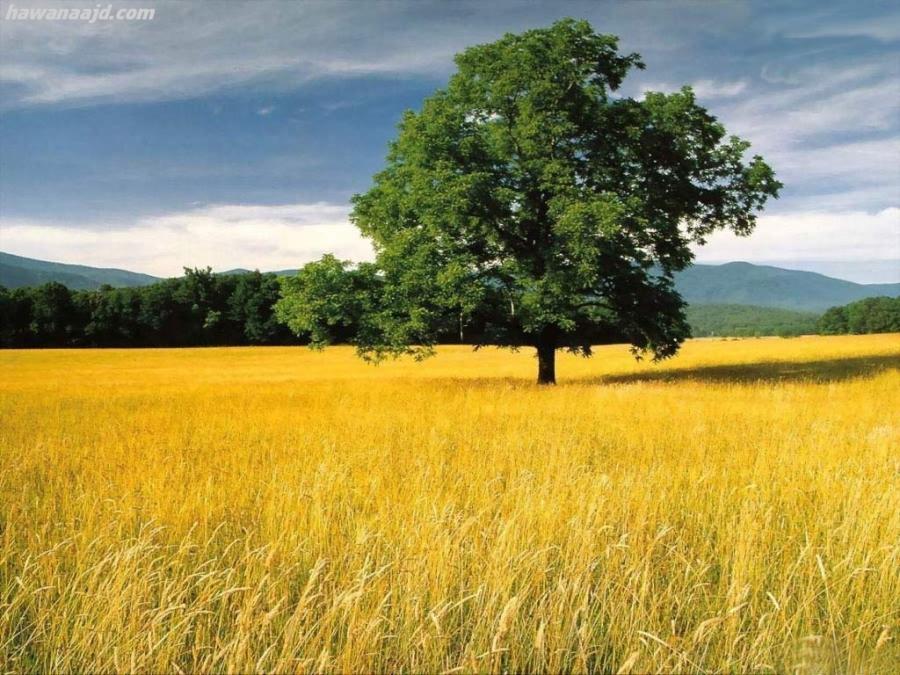 احلى مناظر طبيعية يمكن تشوفها  مناظر طبيعية جميلة  مناظر طبيعية 2021  احلى المناظر الطبيعيه