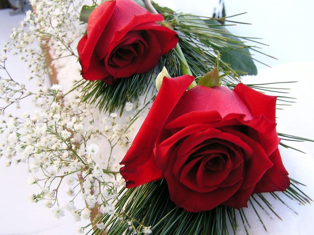 بالصور خلفية ورود وصو زهور جميلة 63180e8246bd583d5fcf3d17dfca44ff