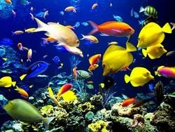 بالصور موضوع عن الاسماك عالم البحار والمحيطات 65b26082d2d893c985e49e8dbf5356c6