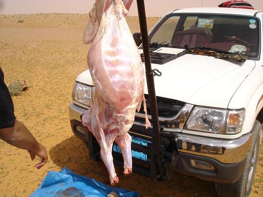 بالصور كيف تذبح الخروف بالطريقة الاسلامية 68c6d48b31d947f7c24e90e69fa4277d
