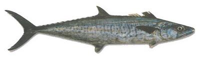 بالصور معلومات عن سمك الدراك بالصور 6a10861d188ef1c7e1705e87bb7e9c41