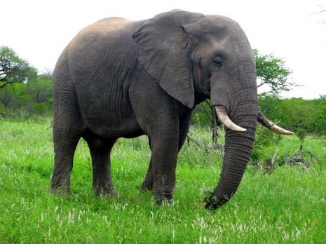 صور تفسير رؤية الفيل في المنام