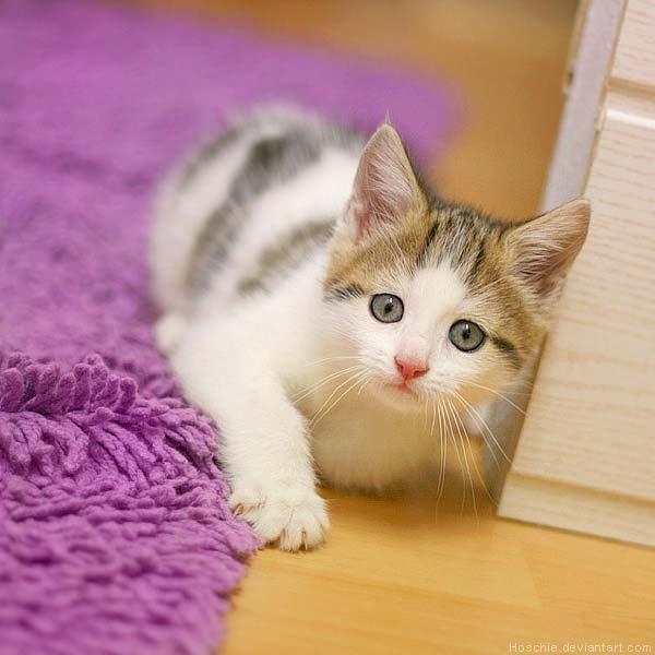 بالصور صور قطط جميلة كيوت 753455c5c36a4a79a470014b02c9d5a0
