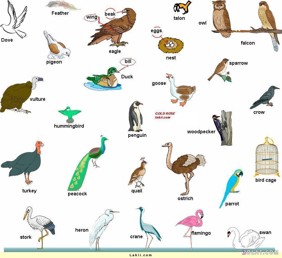 صورة تعرف علي اسماء الحيوانات