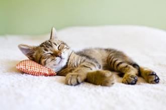 صور كيفية وطريقة النوم بسرعه