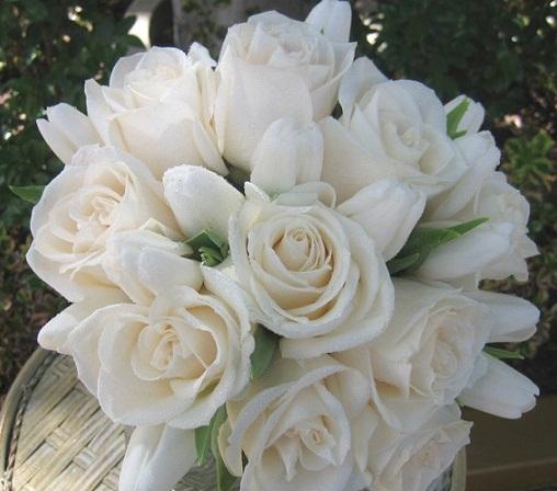 صوره اجمل الورود البيضاء 2017