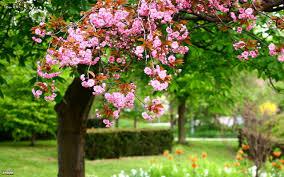 بالصور خلفيات حدائق روعه خلفيات مناظر حدائق لسطح المكتب 82300c00aa8e4040dec23f72e5b2f662