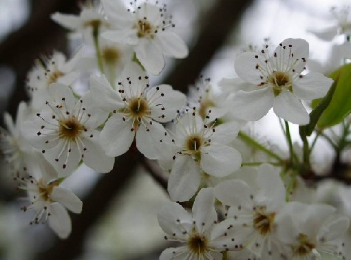بالصور صورة زهور وورود بريه 82ec073ab458bb03d2df533f1db31db8