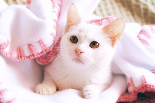 بالصور صور بسس قطط جميلة 8a6e28bf7e07d36b442ac578e918c3c8