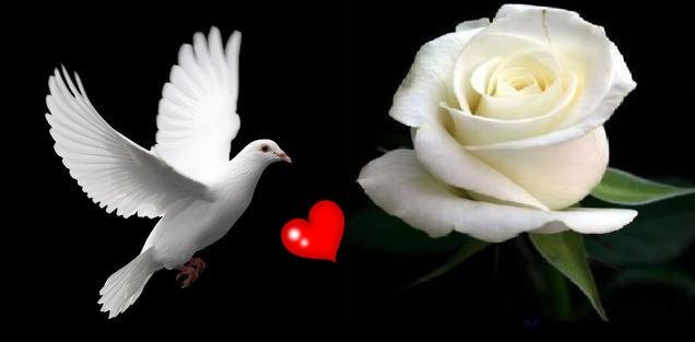 بالصور صور طيور بيضاء متحركة 942cbd077f1f1c183cabfa35f95b1a14