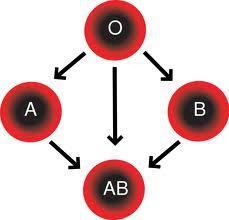 صوره فصيلة الدم o والزواج