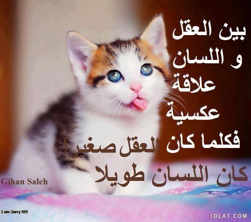 بالصور حكم واقوال من ذهب 9a193c0775788e077aa4a1a734eeb158