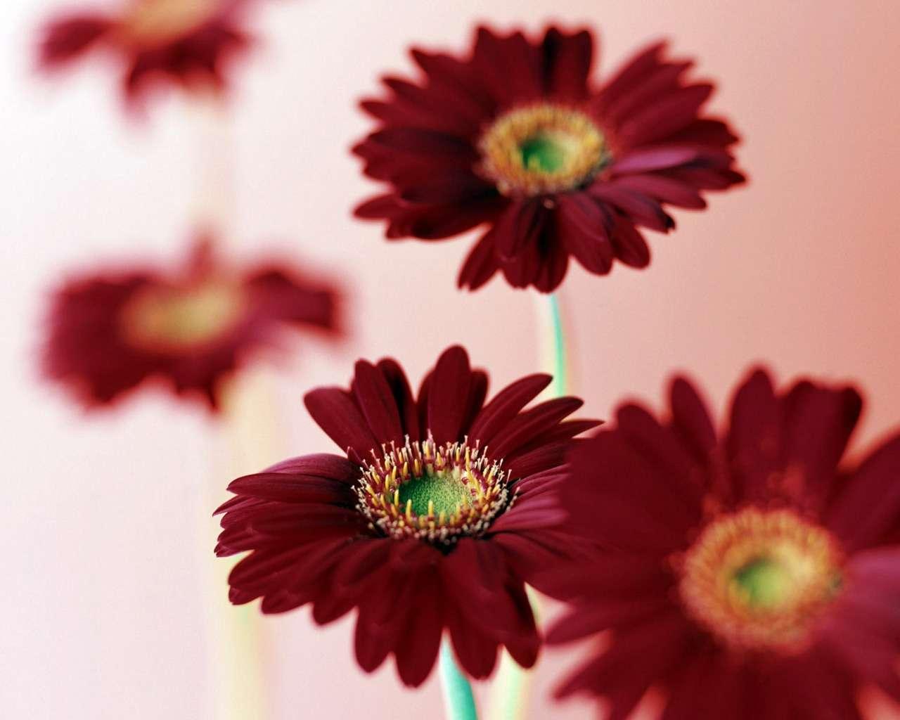 بالصور خلفية ورود وصو زهور جميلة 9a8a189db7eb93aaf53f0a7ca68eeb07