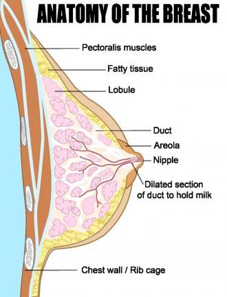 صور علامات الانوثة في جسم المراة