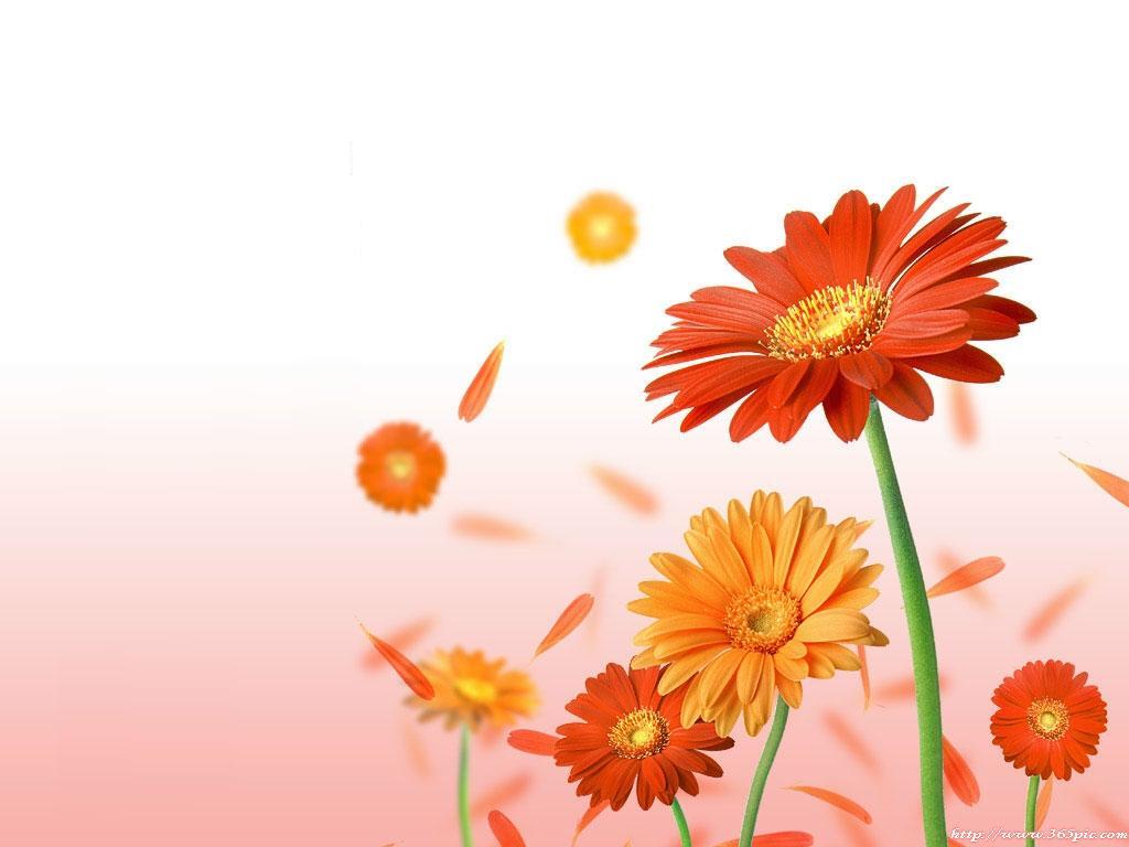 بالصور خلفية ورود وصو زهور جميلة a2e6e8b0468ced0cf6f6027be027199c