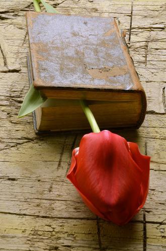 صوره اجمل رسائل حب في العالم