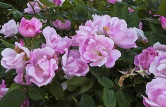 صوره كلمات جميلة عن الزهور