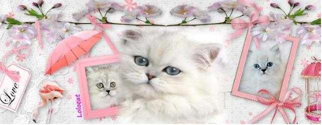 بالصور غلاف واغلفة قطط هادئة وجميلة add8640b696ee396d5de2b51c199369e