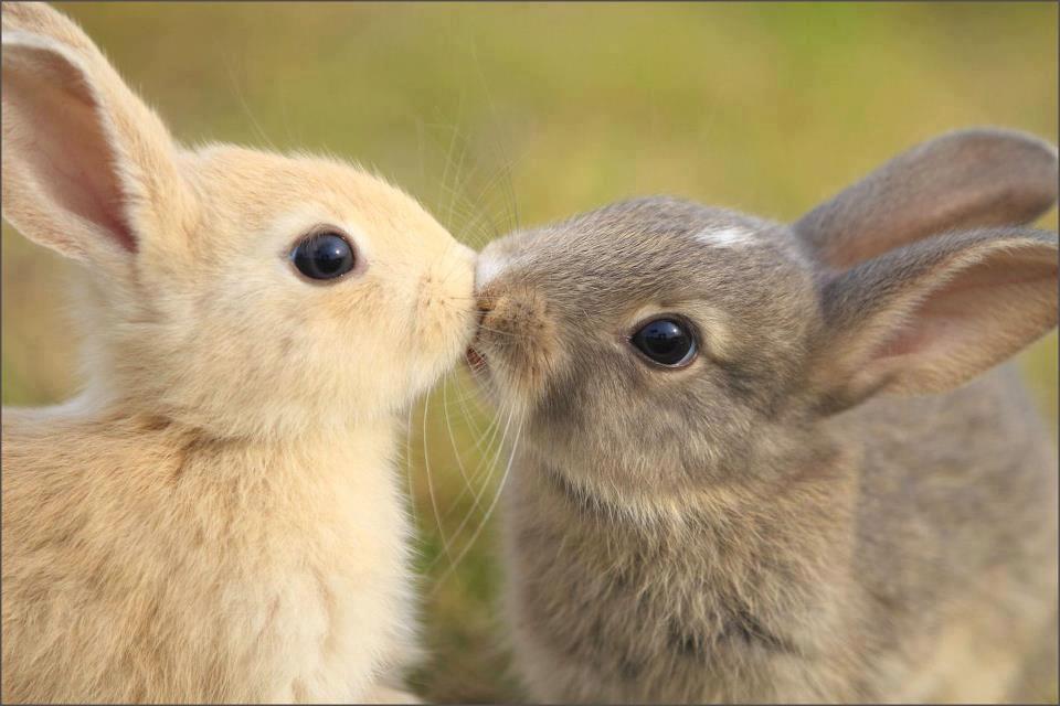 بالصور اجمل صور ارانب صغيرة وجميلة ae12e113bf625478e1d5ba863aa4252e