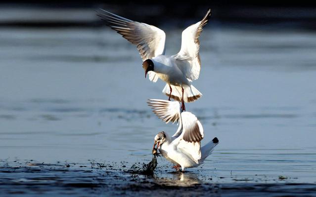 بالصور صور طيور بيضاء متحركة af7dd4734fb46a69e735c422c72d21c6