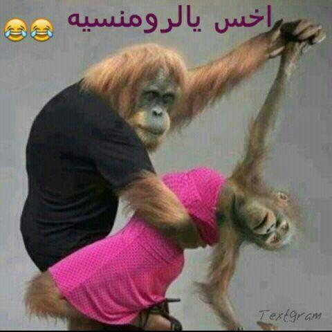 بالصور تحميل افضل الصور المضحكة b13f2032bca3ae1c2a0c0af7a1882ded