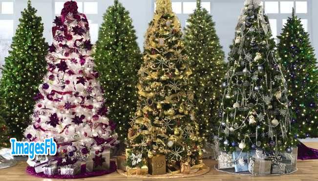 صور شجرة الكريسماس 2019 اجمل صور لشجرة عيد الميلاد 2019 Christmas tree photos
