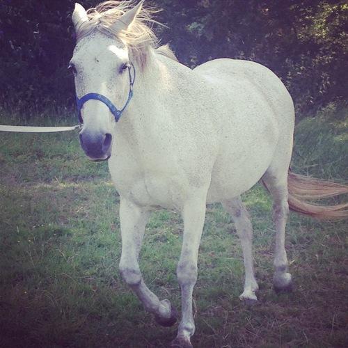 صوره تفسير الحصان في المنام
